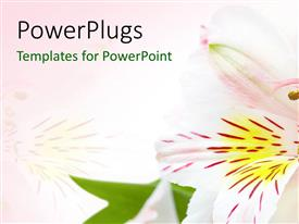 PowerPlugs: PowerPoint template with a beautiful flower with pinkish background