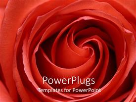 PowerPlugs: PowerPoint template with detailed close up of bright red rose