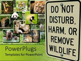 PowerPoint template displaying different tiles showing different animals with a big Do not disturb, harm or remove wildlife sign