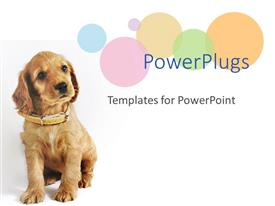 PowerPlugs: PowerPoint template with a dog wearig an brown belt sitting in front of white background
