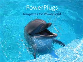 PowerPlugs: PowerPoint template with dolphin with mouth wide open in blue water