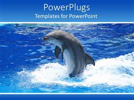 PowerPoint template displaying dolphin playing in blue sea on blue background