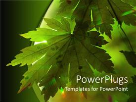 PowerPlugs: PowerPoint template with doted green maple leaf receives sun rays
