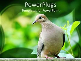 PowerPlugs: PowerPoint template with a dove with greenery in the background