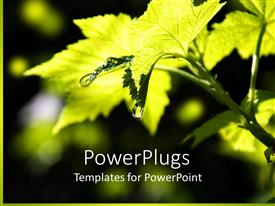 PowerPlugs: PowerPoint template with a drop of water falling from the leaf