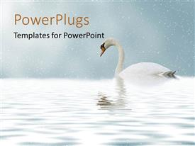PowerPlugs: PowerPoint template with a duck in the lake with blurr background