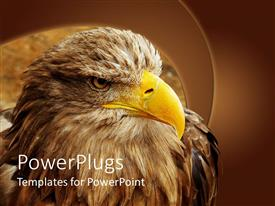PowerPlugs: PowerPoint template with eagle with yellow beak close up in brown background