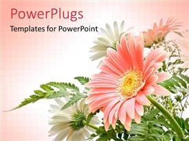 PowerPlugs: PowerPoint template with elegant composition of Gerbera flowers with delicate colors