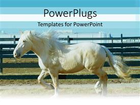 PowerPlugs: PowerPoint template with elegant pure white horse striding in its wooden stable
