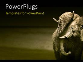PowerPlugs: PowerPoint template with an elephant with a grayish background