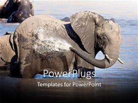 PowerPlugs: PowerPoint template with an elephant washing himself with water from the lake