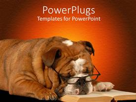 PowerPoint template displaying english bulldog sleeping with reading glasses and novel on red background