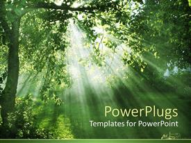PowerPlugs: PowerPoint template with evening sun filtering through forest leaves