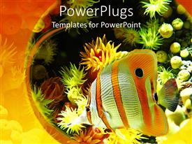 PowerPlugs: PowerPoint template with an exotic fish is swimming in an aquarium which has low depth