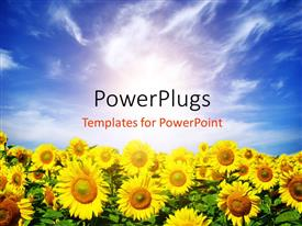 PowerPlugs: PowerPoint template with a field of sunflowers with sky in the background