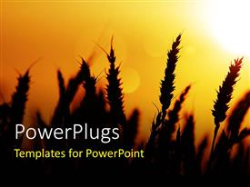 PowerPlugs: PowerPoint template with a lovely sunset view of a wheat field