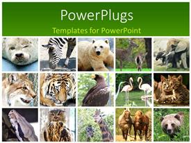 PowerPoint template displaying fifteen tiles with different animals in twos and threes