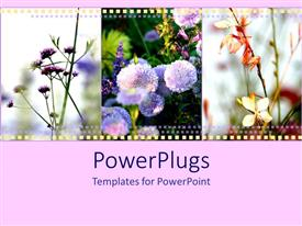 PowerPlugs: PowerPoint template with film strip of different flowers over light pink surface