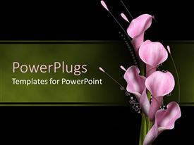 PowerPlugs: PowerPoint template with five opened lilac pink callas over delicate floral pattern on green and black background
