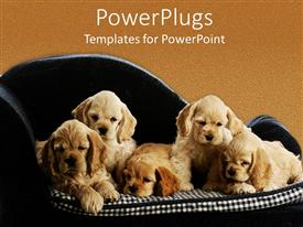 PowerPlugs: PowerPoint template with five puppies little dogs sitting on a square pattern mattress black couch