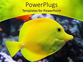PowerPlugs: PowerPoint template with flat tropical yellow colored fish with a pointy mouth