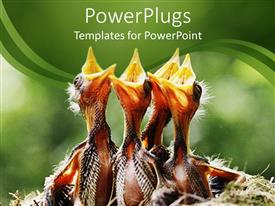 PowerPlugs: PowerPoint template with a flock of wild birds waiting for their mother to feed them
