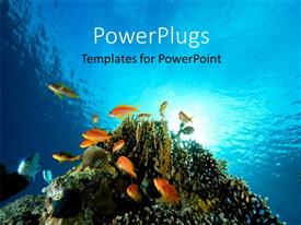 PowerPlugs: PowerPoint template with floor bed of red sea with Coral and fish swimming