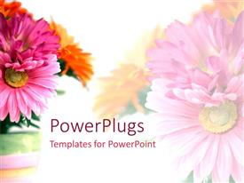 PowerPlugs: PowerPoint template with floral theme showing bouquet of pink and orange carnations on white background