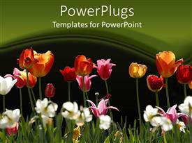 PowerPoint template displaying a flower garden with green background