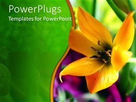 PowerPlugs: PowerPoint template with a flower with greenery in the background