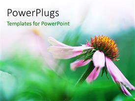 PowerPlugs: PowerPoint template with a flower with greenish background and place for text