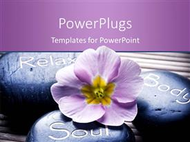 PowerPoint template displaying flower and stones with different messages as relax, body and soul engraved on them