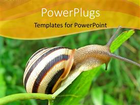 PowerPlugs: PowerPoint template with a hard shelled snail crawling on a green leaf blade.