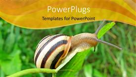 PowerPoint template displaying a hard shelled snail crawling on a green leaf blade.