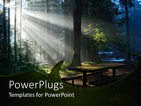 PowerPoint template displaying forest with trees and green leaves and leaves on the ground with sun rays getting through the tree branches