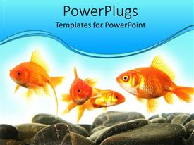 PowerPoint template displaying four gold fishes swimming with pebbles and stones