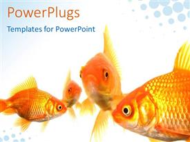 PowerPoint template displaying four goldfishes in various swimming positions on bright background with light blue bubbles in two corners