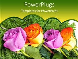 PowerPoint template displaying four roses, two purple rose buds and two orange rose buds on green ferns