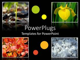 Presentation theme consisting of four tiles with different flowers on a black background
