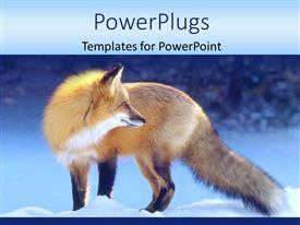 PowerPlugs: PowerPoint template with a fox with ice in the background and place for text