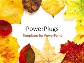 PowerPoint template displaying frame with beautiful autaumn leaves