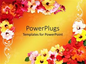 PowerPlugs: PowerPoint template with frame with multi colored hibiscus flowers designing the corners