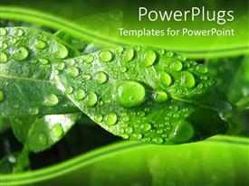 PowerPlugs: PowerPoint template with fresh drops of water on green leaves