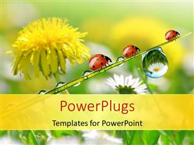 PowerPoint template displaying fresh flowers with morning dew and ladybird depicting nature