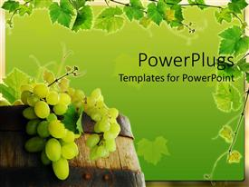 PowerPoint template displaying fresh grape in wine barrel with grapevine framing on green background