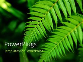 PowerPoint template displaying fresh green leaf the nature texture background