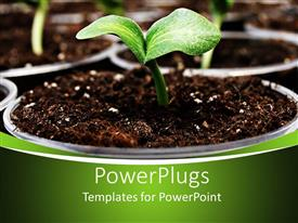 PowerPlugs: PowerPoint template with fresh green pumpkins sprouting in cute plant pots