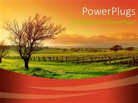 PowerPoint template displaying fresh green vineyard and trees with wooden fence at sunrise