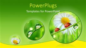 PowerPoint template displaying fresh morning dew and ladybird over green and yellow background depicting nature
