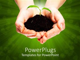 PowerPoint template displaying fresh plant growing from a small pile of earth held in hands